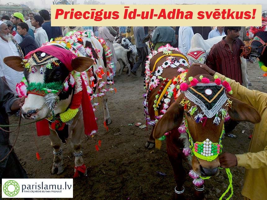 Eid-Ul-Azha-Aacrificial-Animals-7