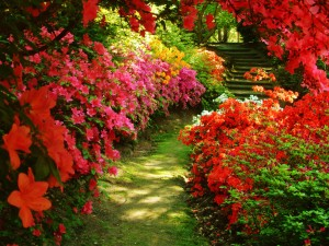 beautiful-garden-2
