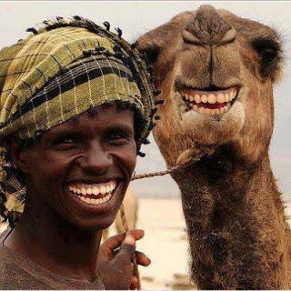 Camel-Laughing-788333