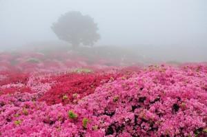 Spring-beautiful-nature-22727173-900-597