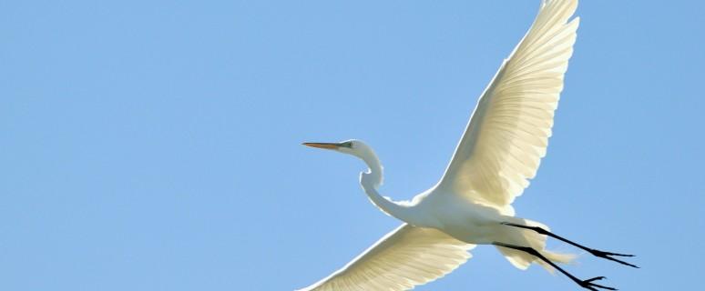 flying-bird-hd-wallpaper