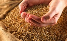 1423663119_healthy-grains