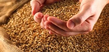 1423663119_healthy-grains