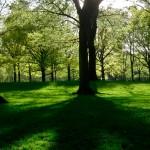 central-park-lush-green
