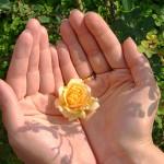 0hands-flower-hamed_277221852