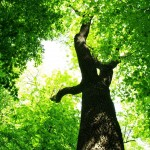 green-tree-wallpaper-3