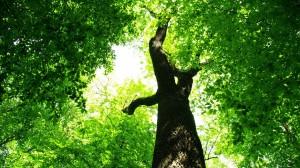 green-tree-wallpaper-3