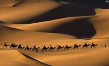 bedouins-on-camels-people-camels-desert-sand-177326