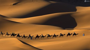 bedouins-on-camels-people-camels-desert-sand-177326