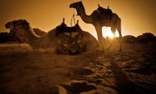 Wadi-Rum-Camel-sunset-1-XL