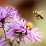 just-a-bee-160138394-599385d3d088c00013d499f9